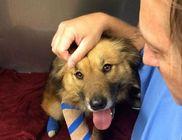Hogy megmentse gazdái életét a golyók elé ugrott a hős kutyus