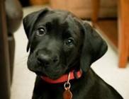 Tizenkét aranyszabály, hogy kulturált kutyatartónak mondhassuk magunkat!
