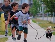 A kutya felszerelése, mi kell a kutya tartásához