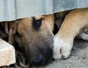 Nem jó a kutyát láncon tartani... ne tartsd láncon a kutyát!