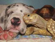 Nem mindennapi barátságok állatok között