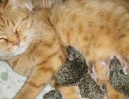 Macskamama eteti a kis süniket - fotóval!