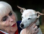 21 éves lett a világ legöregebb kutyája