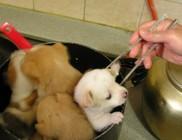 Koreában még mindig sokan esznek kutyát