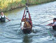 Daru segítségével menekült meg a csatornába csúszott ló