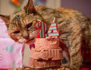 24 éves lett a világ legidősebb cicája