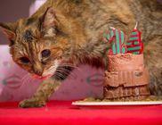 24 évesen halt meg a világ legidősebb macskája