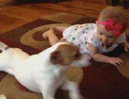 Nagyon aranyos: a kutyus akarta megtanítani kúszni a kisbabát