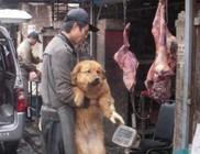 10.000 kutyát vágnak le minden évben a jülini kutyahús-fesztiválon - durva képekkel!