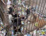 40 kiskutyát mentettek ki egy csepeli raktárból