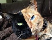 Nem hamisítvány, tényleg ritkaság a cica színösszeállítása