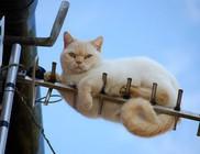 Nem horror, csak macska - kedvelt cica kiránduló helyek