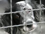 Betiltaná az internetes állatkereskedelmet Bécs
