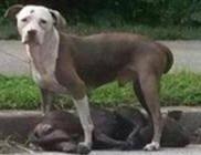 Órákig őrizte haldokló társát a kutya