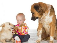 A kutyák is képesek a féltékenykedésre