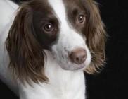 Naponta több kilométert tesz meg a kutyus, hogy ennivalót vigyen kölykeinek!