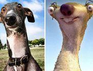 Kutyusok, akik nagyon hasonlítanak valaki vagy valami másra