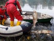 Tömeges halpusztulás a somogyudvarhelyi horgásztavaknál - ki és mivel szennyezte be a vizet?!
