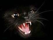 Sátánista szeánszokra áldozzák fel az állatokat
