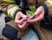 Égő lakókocsiból mentettek ki egy hörcsögcsaládot a tűzoltók
