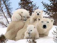Imádnivaló családi fotók állatokról