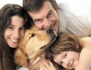 12 fontos dolog, amit tudni kell a kutyákról