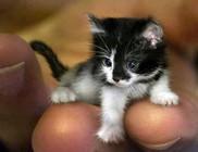 A kiscica, aki lehet, hogy a világ legkisebb cicája lesz?!