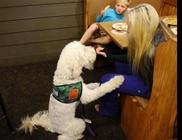 Hős kutyus: megmentette a cukorbeteg kisfiú életét