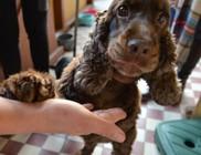 Három lábbal éli kutyaéletét Boney