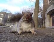 A mókus, aki operatőrnek állt