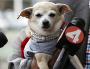 Egy napig volt polgármester a kutyus