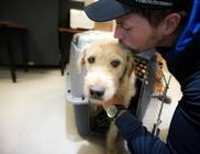 690 kilométert tett meg extrém körülmények között a kóbor kutyus, de végül szerető gazdira talált