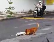 Megható videó: Elgázolt társán próbál meg segíteni a kutyus