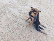 Megmentőre és szerető Gazdira talált a hátsó lábaira lebénult kutyus