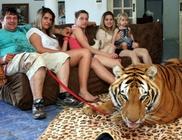 Két tigrissel él együtt a nem mindennapi család