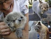 15 évet élt a világ legidősebb kétarcú cicája