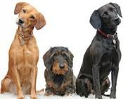 Kutyanév kereső - kutyanevek