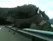 Durva ütközés őzzel - videó