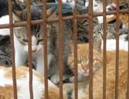 Ezer macska szabadult ki