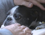 Túlélte a 15 emeletes zuhanást a kutyus