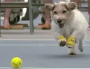 Kutyajó teniszlabda szedők - videóval