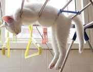 A cicák bárhol képesek aludni