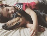 Csodálatos barátság a dobermann és a 3 éves kislány között