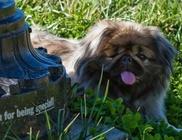 Harminchat métert zuhant a kutyus: csodával határos módon túlélte