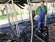 Tűzvész pusztított a menhelyen