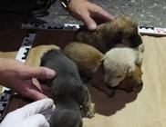 Kútba dobott kiskutyákat mentettek ki a speciális mentők