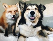 A róka és a kutyus barátsága