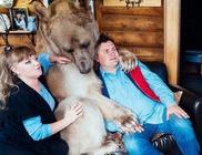 Családtagként él a medve a házaspárral