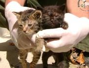 Állatvédő adó 1 százalék támogatás